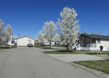 We Have Park Owned Mobile Homes That Rent They Range From 2 Bedroom 1 Bath To 3 Price Varies For Each Home